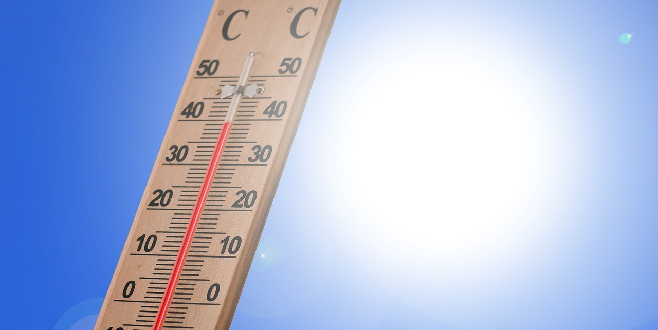 How to Download the My Thermometer App