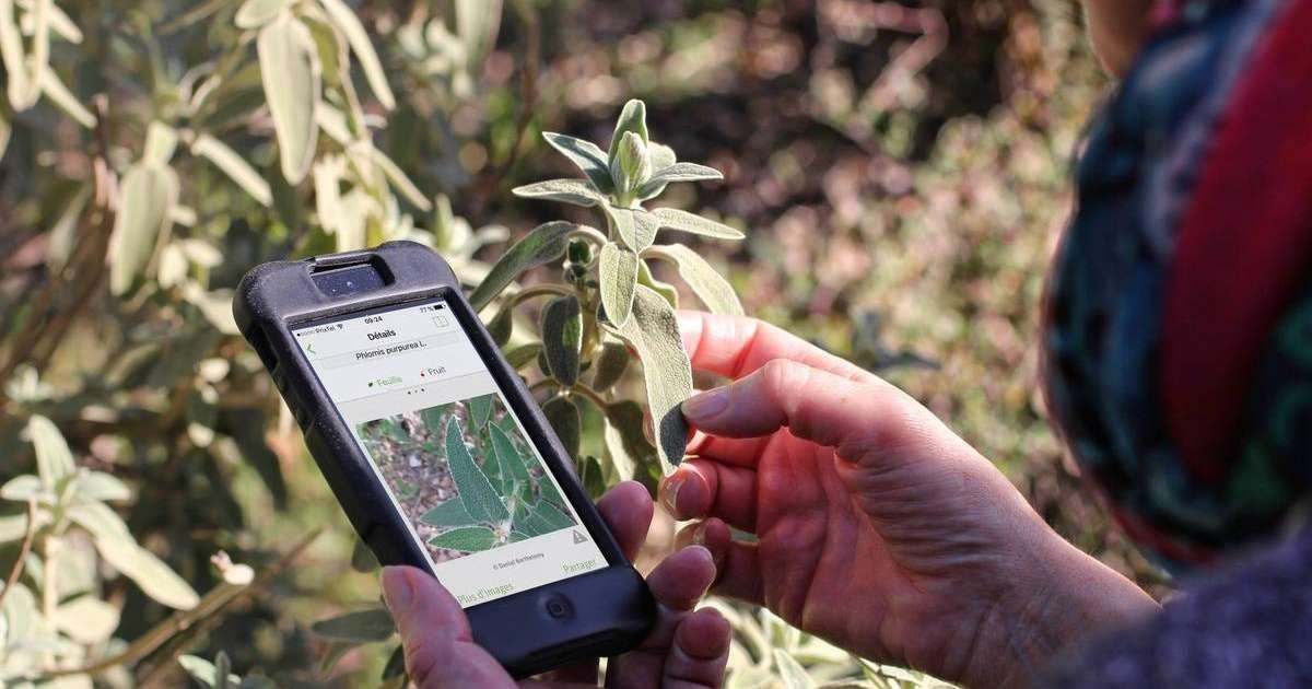 Never Confuse Plants Again With PlantNet: The Plant Identification App